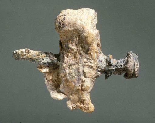 Osso del calcagno della persona crocifissa trovata a Giv'at ha-Mivtar con ancora il chiodo conficcato